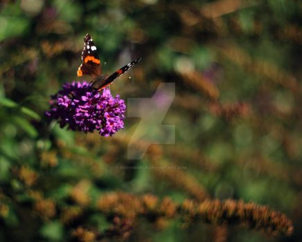 Butterfly by sorinmarius