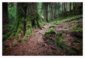 Old Growth by jasonwilde