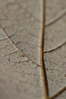 Leafy Roads by Suinaliath
