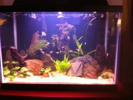 my 20 gallon aquarium by DarkRedTigr