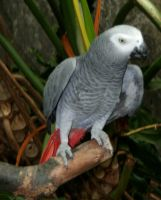 Gage Park Zoo 33 - Parrot by Falln-Stock