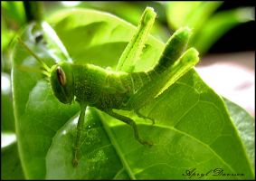 Hopper2 by 1Elevin1