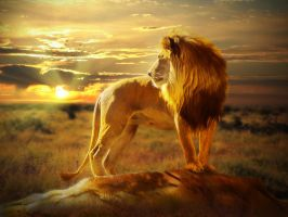 Lion by Alena-48