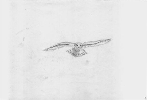 Flying owl animation (45) by Hedwigs-art