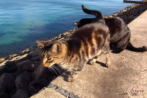 wild cats on L.P. by Zlata-Petal