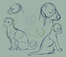 Furre Terrier: Pup Sketches by PaintedCricket