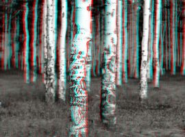 White Forest 3-D conversion by MVRamsey