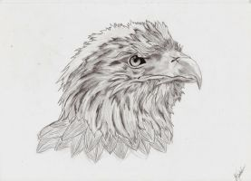 Eagle by HellDestroyer