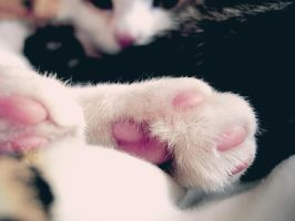 Little Paws by PixieDrunk