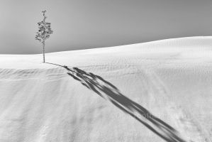 Dune Art D756664-1 by detphoto
