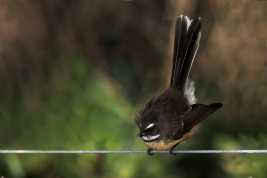 Bird on a Wire by carterr