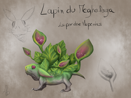 Leporidae Nepenthes by onimenotokito