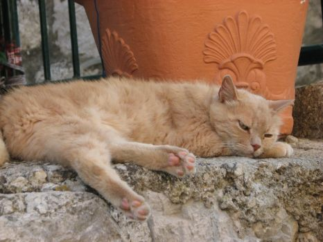 Cat's eyes... (Dubrovnik's wild cats serie) by sylwia49