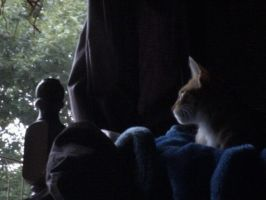 Watching the storm.. by poketronex
