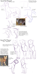 Quick Cat Anatomy Tutorial by AddictionHalfWay