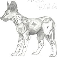 African Wild Dog by mikiayla97