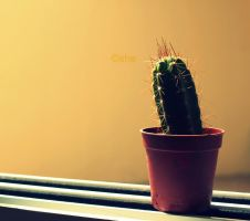 My Tiny Cactus by Whatsername2609