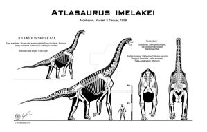 Atlasaurus imelakei skeletal by Paleo-King