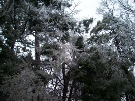 Crystalized Iced Trees by SupernovaSword