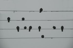 Songbirds? by BenoitAubry
