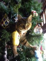 Cat in Christmas Tree by srg1