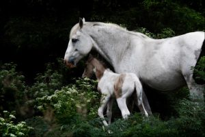 The Foaling Grove by Valarian-Warrior