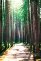 Miracle forest by Genius74