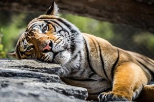Sweepy Kitty by 904PhotoPhactory