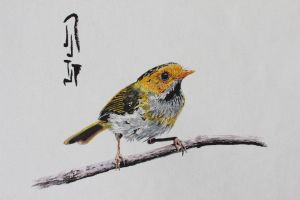 Rufous-faced Warbler by Boio8010