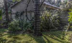HDR Garden Test by FireStorm101