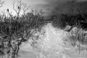 The Path by Jack-Nobre