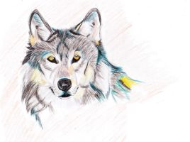 wolf drawing by silk501