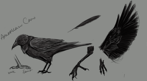 Crowsketches by Ajix