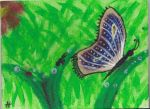 leisure painting 2 summer '13 (Butterfly) by zippymom97