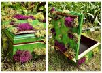 Cozy Moss Covered Box by GrotesqueDarling13