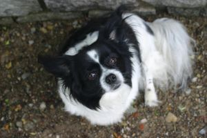 Black and White Dog 2 by cstarr-stock