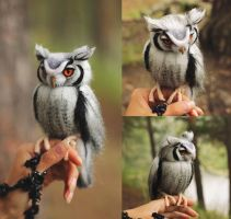 White-faced owl by Irentoys