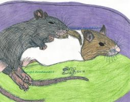 Baby rats snuggling by MaguschildCloud