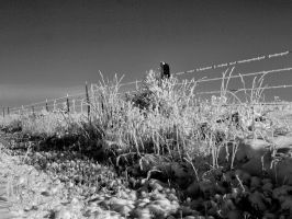 snowy fence 15 bw by fotophi