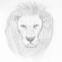 Lion Sketch by nutzi66