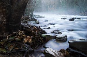 Foggy River - 3973 by utoks