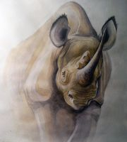 rhino by Dagger-dancer