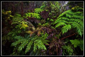 Ferny Mess by aFeinPhoto-com
