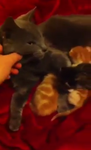 Lucy adopted kittens! VIDEO ADDED by RakshaWw