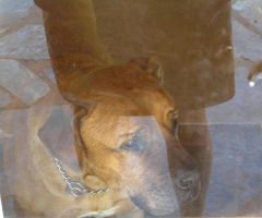 Dogs Reflection and Skirt, SA by Jenvanw
