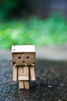 Danbo Walking in the Rain by craigmdennis