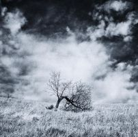 A lonely tree on a hill 2 by DANZIEG
