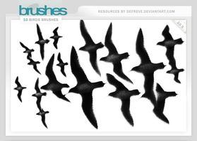 Brushes - Birds by Defreve