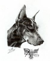 Doberman Portrait in Graphite by DefiantArtistry