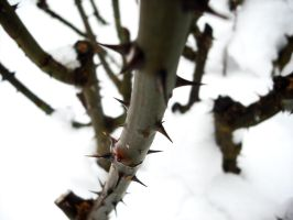 Thorns in WINTER by Gillfeesh
